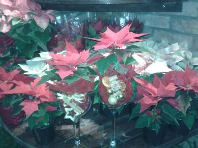 kwiaty 46